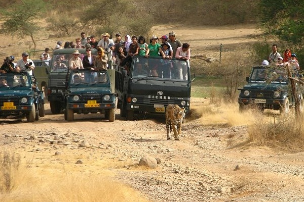 Ranthambore Canter Safari